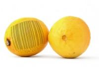 Pastila de sănătate: Organisme modificate genetic (OMG), un pericol enorm pentru specia umană