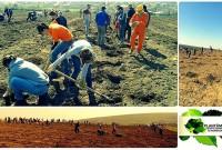 Se caută voluntari pentru plantarea a un milion de copaci!