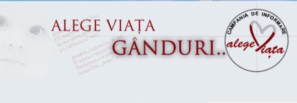 Anul 8 sau Despre cum se învârte roata: Colegiul Național Vasile Goldiș